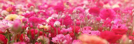 campo de flores: bandera del Web site de la foto de ensueño con bajo ángulo de flores de primavera