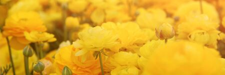 prespective: website banner of dreamy photo with low angle of spring flowers