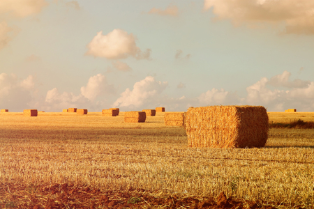 image of gold wheat haystacks field at sunset light. Stock Photo