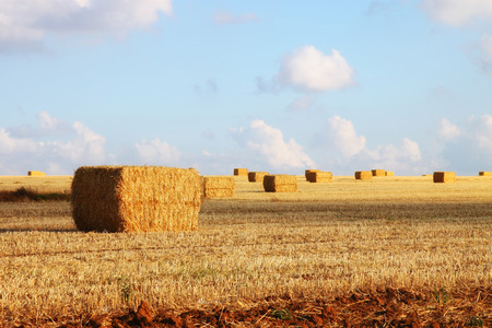 image of gold wheat haystacks field and blue sky