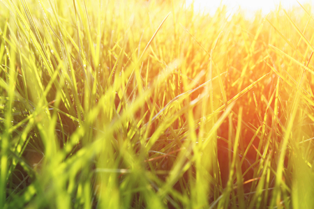 renewal: low angle view of fresh grass. freedom and renewal concept. retro filtered image
