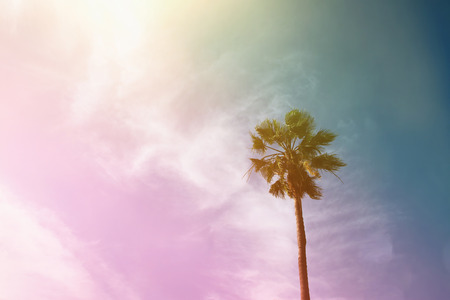 sunrise ocean: Palm trees against sky. retro style image. travel, summer, vacation and tropical beach concept. Stock Photo