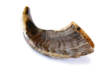 Shofar (horn) isolated on white. Rosh hashanah (jewish New Year holiday) traditional symbol