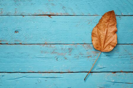 old texture: Autumn background with dry leaves on wooden table