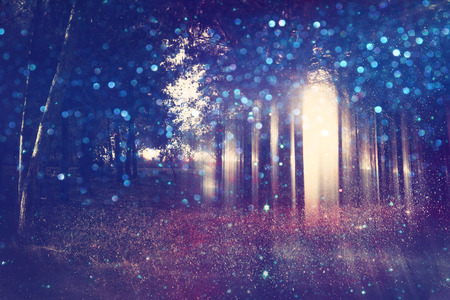 mystical forest: Abstract and mysterious background of blurred forest. Filtered image. Halloween concept