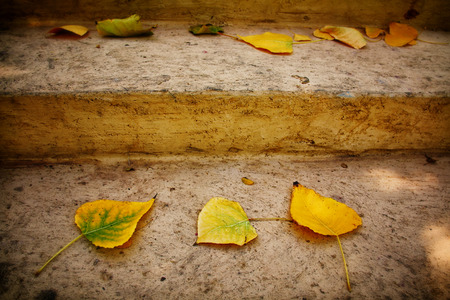 hojas antiguas: Autumn background with dry leaves on the old stone stairs.