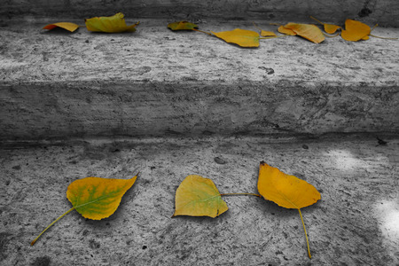 white color: fall leafs over old stone stairs. selective color.