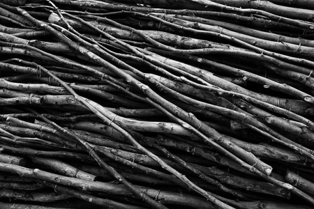 many branches: Black and white closeup image of many tree branches creating natural pattern Stock Photo