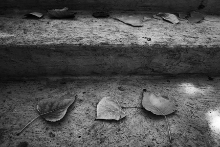 fall of the leafs: fall leafs over old stone stairs. selective color. Black and white image