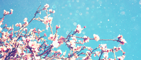 Abstract blurred website banner background of spring white cherry blossoms tree. selective focus. vintage filtered with glitter overlay