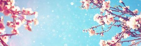 cerezos en flor: Resumen de fondo página web bandera borrosa de la primavera flores de cerezo blanco árbol. atención selectiva. la vendimia se filtra con una capa de brillo