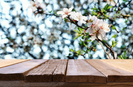 wooden rustic table in front of spring cherry blossoms tree. vintage filtered image. product display and picnic concept