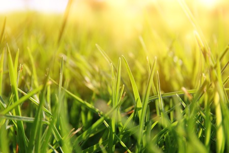 low angle view of fresh grass against sunlight. Stock Photo