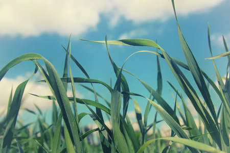 low angle view of fresh grass against blue sky