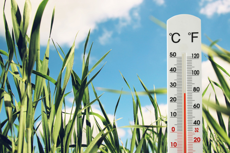 termometer: thermometer at field of green young grass indicating spring time and weather change Stock Photo