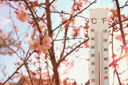 termometer: thermometer at field of flowers indicating spring time and weather change