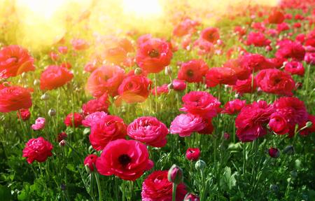 Afbeelding van mooie roze lentebloemen.