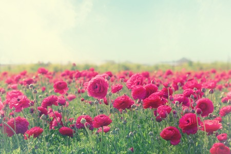 Image of beautiful pink spring flowers.