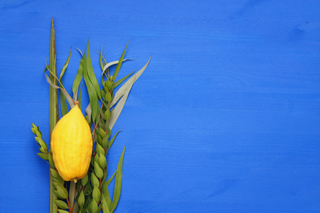 succos: Jewish fall festival of Sukkot. Traditional symbols (The four species): Etrog, lulav, hadas, arava.