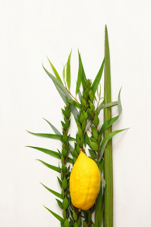 Jewish festival of Sukkot. Traditional symbols (The four species): Etrog, lulav, hadas, arava. Stok Fotoğraf - 84272785
