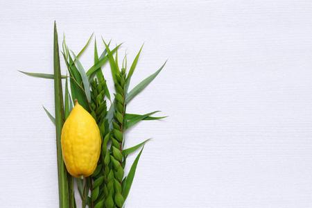 Sukkot의 유대인 축제. 전통적인 기호 (4 종) : Etrog, lulav, hadas, arava. 스톡 콘텐츠 - 84749261