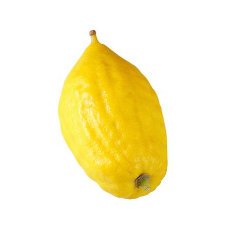 sukkoth festival: Jewish festival of Sukkot. Etrog (Lemon)Traditional symbol (One of The four species). Isolated on white.