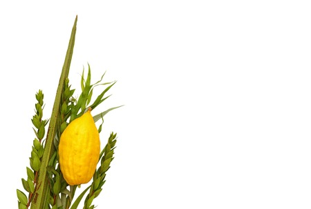 arava: Jewish festival of Sukkot. Traditional symbols (The four species): Etrog, lulav, hadas, arava. isolated on white. Stock Photo