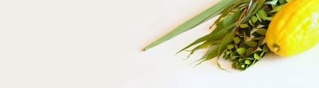 hadas: Jewish festival of Sukkot. Traditional symbols (The four species): Etrog, lulav, hadas, arava.