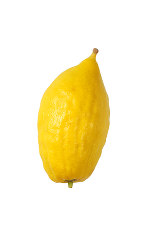 succos: Jewish festival of Sukkot. Etrog (Lemon)Traditional symbol (One of The four species). Isolated on white.