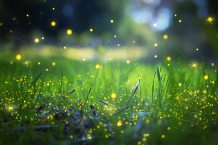 Immagine astratta e magica del volo della lucciola nella foresta di notte. Concetto di fiaba Archivio Fotografico