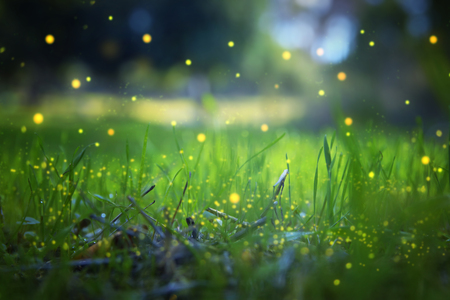 Abstract and magical image of Firefly flying in the night forest. Fairy tale concept