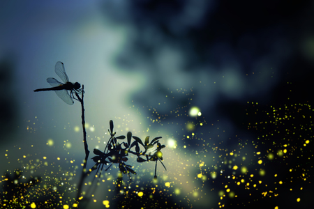 Abstract and magical image of dragonfly silhouette and Firefly flying in the night forest. Fairy tale concept Stock Photo - 91948185