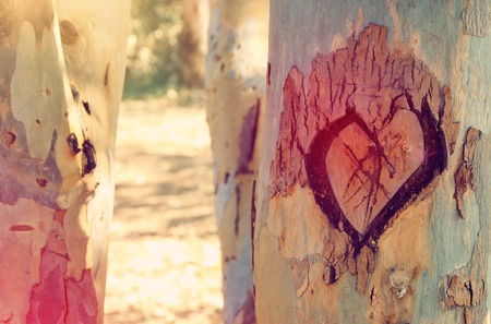 Photo of old tree trunk with heart carved on it. Valentines day concept. Romantic background Stock Photo