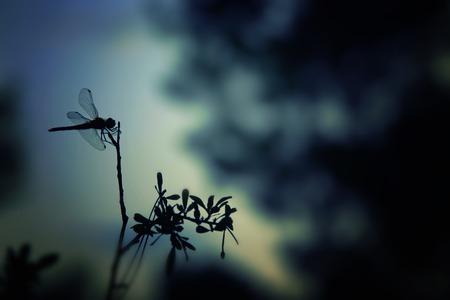 Abstract en magisch beeld van libellesilhouet in het nachtbos. Sprookje concept
