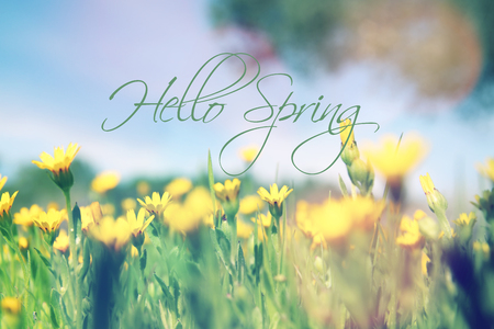 low angle view image of fresh grass. freedom and renewal concept with spring text