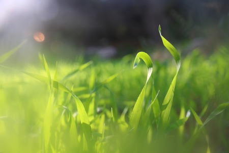 low angle view of fresh grass. freedom and renewal concept