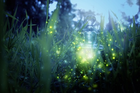 Magical fairy dust potion in bottle in the forest 免版税图像 - 95745757
