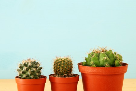 Image of cactus in a pot infront of wooden blue background