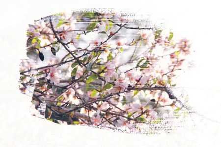 dreamy and abstract image of cherry tree. double exposure effect with watercolor brush stroke texture