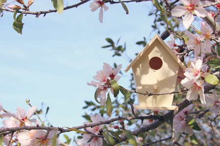 Little birdhouse in spring over blossom cherry tree