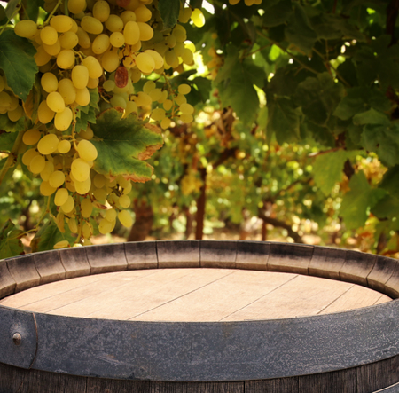 Image of old oak wine barrel in front of wine yard landscape. Useful for product display montage Stock Photo
