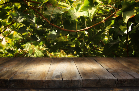 Image of wooden table in front of blurred vineyard landscape at sun light. Ready for product display montage Stock Photo