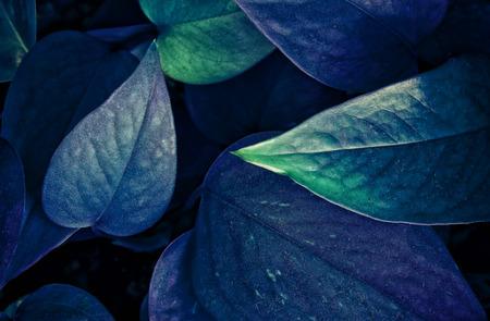 Ultra Violet background effect made of fresh leaves Reklamní fotografie - 97950052