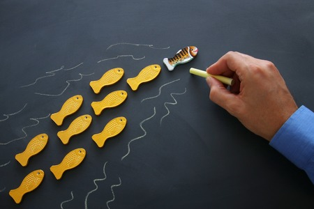 Leadership concept with swimming fish over blackboard background. One leader leads others