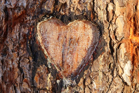 Photo of old tree trunk with heart carved on it. Valentine's day concept. Romantic background