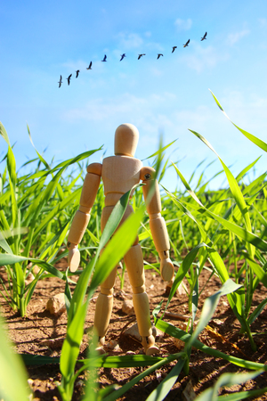 Photo of wooden dummy standing in field looking forward at flying birds. Think big and dream concept