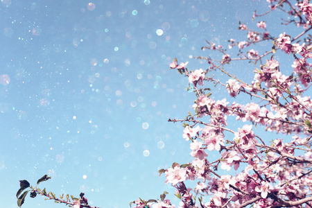 background of spring cherry blossoms tree. selective focus Standard-Bild - 116575574