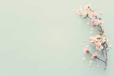 photo of spring white cherry blossom tree on pastel blue wooden background. View from above, flat lay
