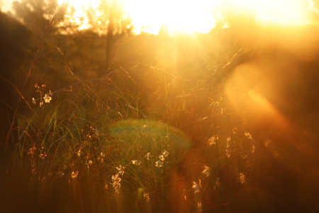 blurred abstract photo of sunset light burst among flowers in the forest and bokeh
