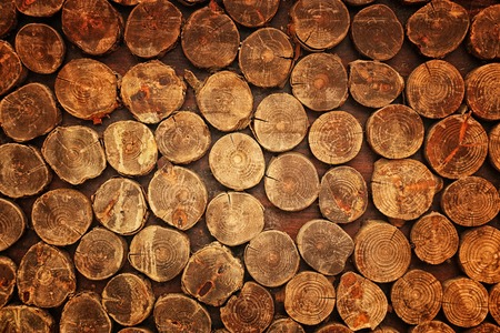 wooden background with texture of many tree trunks